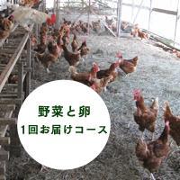 有機・無農薬で栽培した西日本の野菜セットと平飼い卵 1回分コース