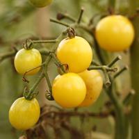有機・無農薬で栽培した西日本の野菜セット 毎週お届けコース